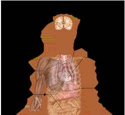 bem-pemf-Symptoms_of_acidosis