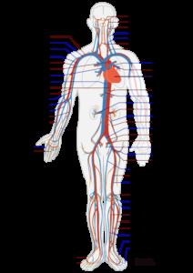 bem-pemf-circul system