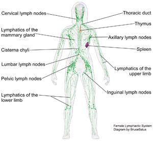 bem-pemf-lymphatic system